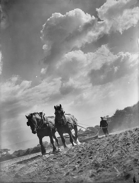 Tranquil Scene「Ploughing The Land」:写真・画像(4)[壁紙.com]