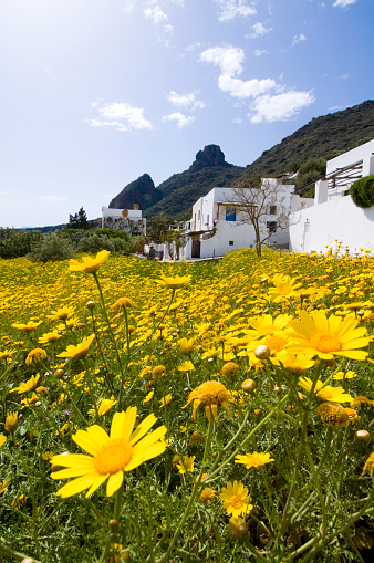 Panarea「Yellow Wildflowers by Houses on Coast」:スマホ壁紙(9)
