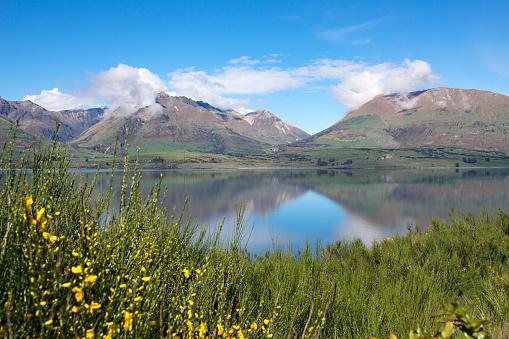 静かな情景「Yellow wild flowers and Lake Wakatipu in early spring.」:スマホ壁紙(8)