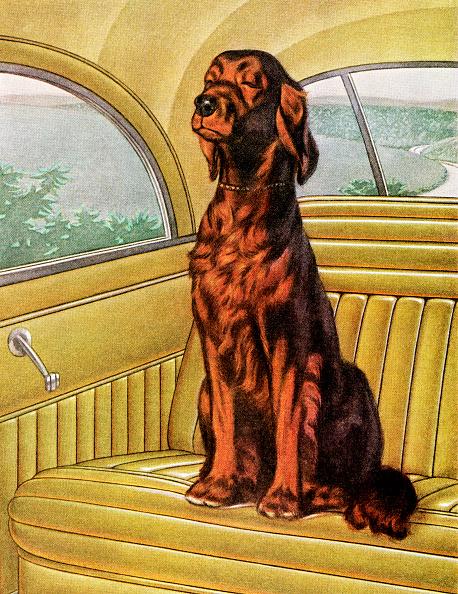 GraphicaArtis「Irish Setter Sitting In A Car」:写真・画像(5)[壁紙.com]