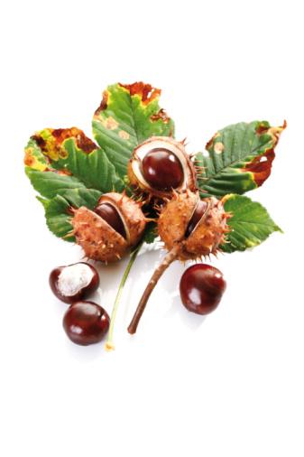 chestnut「Horse Chestnuts (Aesculus hippocastanum) and chestnut leaf, elevated view」:スマホ壁紙(19)
