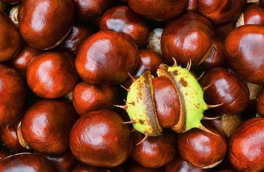 Chestnut Tree「Horse Chestnuts」:スマホ壁紙(3)