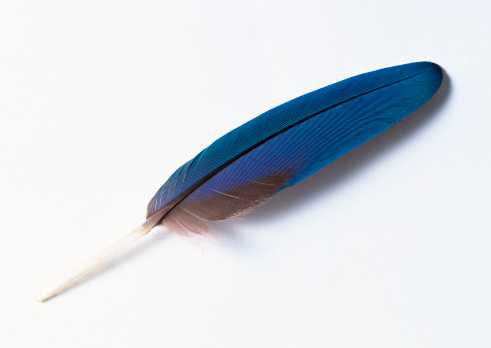 Feather「Feather」:スマホ壁紙(9)