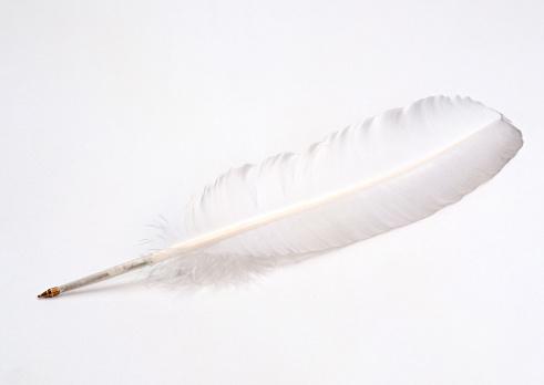 Feather「Feather」:スマホ壁紙(19)
