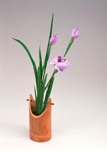 こどもの日「Iris」:スマホ壁紙(6)