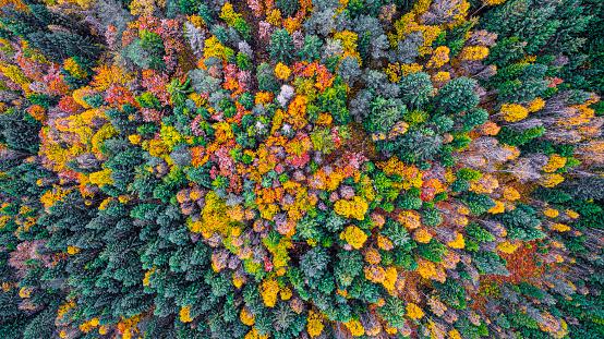 秋「上から見た秋の森」:スマホ壁紙(7)