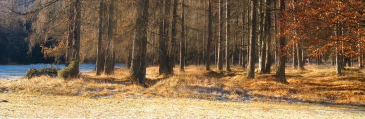 European Larch「Autumn Forest Panorama」:スマホ壁紙(19)