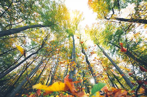 秋「秋の森」:スマホ壁紙(19)