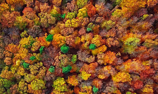 Woodland「Autumn forest aerial background made directly from above」:スマホ壁紙(14)