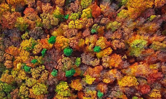 飽和色「上から直接作られた秋の森空中の背景」:スマホ壁紙(3)