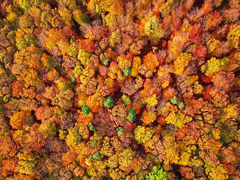 Czech Republic「Autumn forest aerial background made directly from above.」:スマホ壁紙(13)