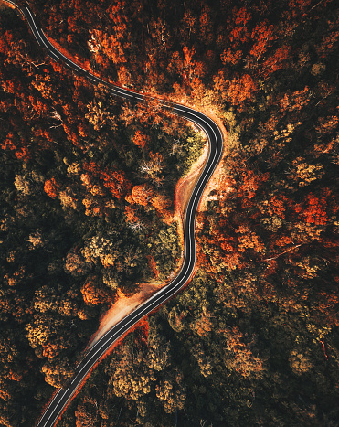 Winding Road「autumn forest aerial view in australia」:スマホ壁紙(13)
