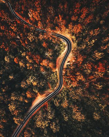 秋「オーストラリアの秋の森林空中写真」:スマホ壁紙(12)