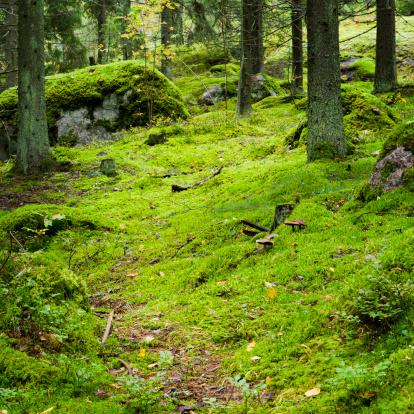 Finland「Autumn forest Finland」:スマホ壁紙(16)