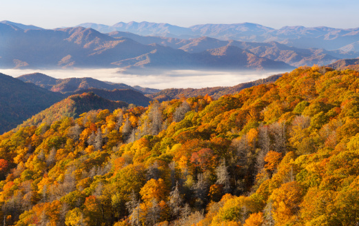 Tennessee「Autumn Forest and Mountains」:スマホ壁紙(17)