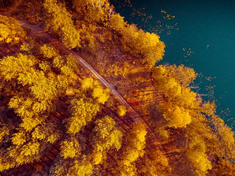 秋「道路と秋の森」:スマホ壁紙(2)