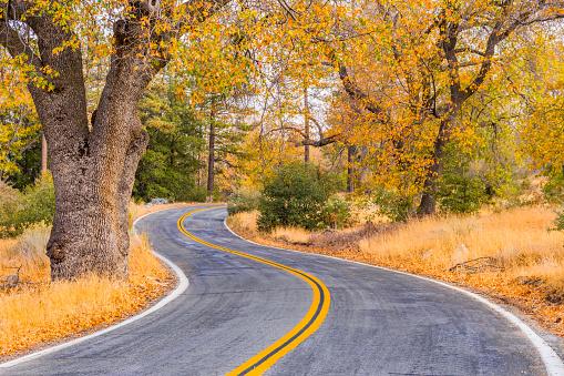 落葉樹「道路に大きな負担湖サン ・ バーナディノ、Ca と秋の森」:スマホ壁紙(10)