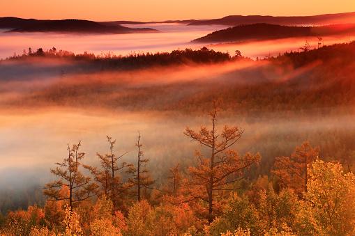 Heilongjiang Province「Autumn forest in Greater Khingan Range, China」:スマホ壁紙(19)