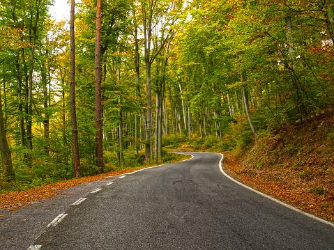 Variegated Foliage「Autumn forest road」:スマホ壁紙(8)