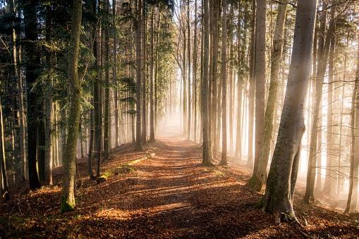 秋「Autumn forest in mist, Salzburg, Austria」:スマホ壁紙(0)