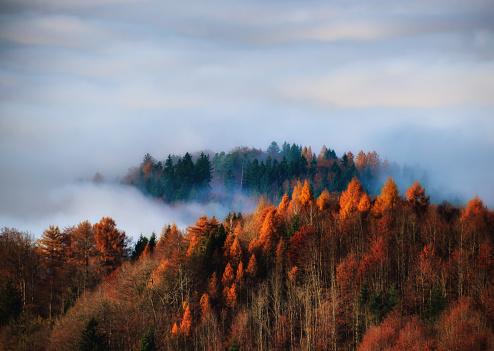 秋「Autumn forest in the fog, Uetliberg, Switzerland」:スマホ壁紙(0)