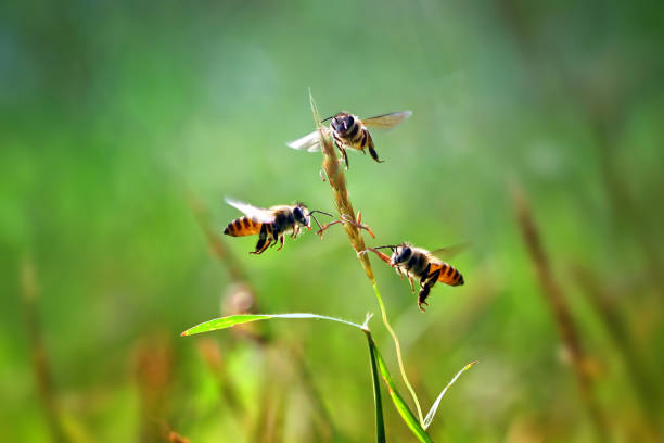 Three honey bees hovering by a blade of grass:スマホ壁紙(壁紙.com)