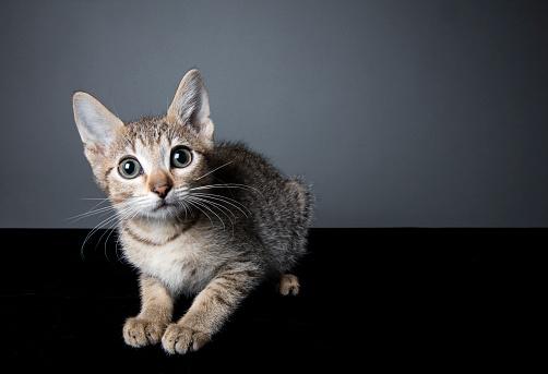 猫「横になってとらの子猫」:スマホ壁紙(19)