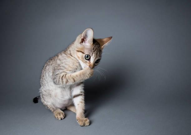 彼の足を舐めているとらの子猫:スマホ壁紙(壁紙.com)