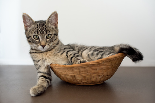 子猫「Tabby kitten lying in a basket」:スマホ壁紙(17)