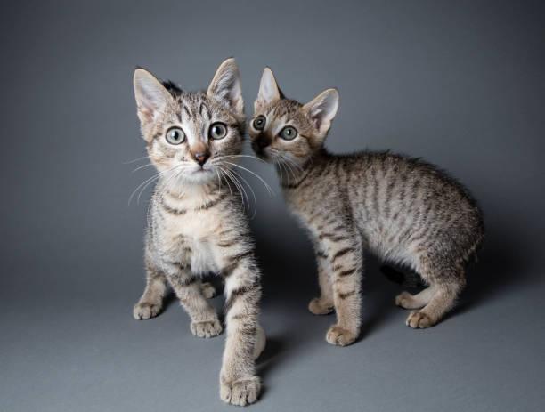 平織りの子猫:スマホ壁紙(壁紙.com)