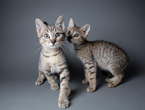 猫「平織りの子猫」:スマホ壁紙(15)
