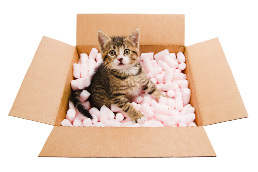 Kitten「tabby キトンボックスに」:スマホ壁紙(3)