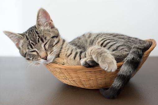 子猫「Tabby kitten napping in a basket」:スマホ壁紙(0)