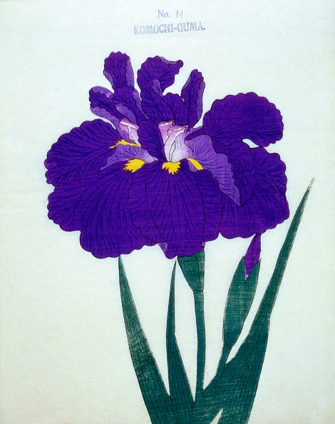 紫「Komochi-Guma No 14」:写真・画像(8)[壁紙.com]
