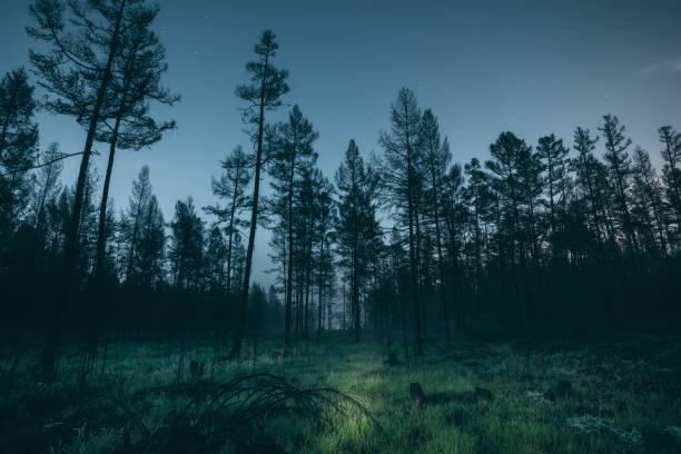 Forest at night:スマホ壁紙(壁紙.com)