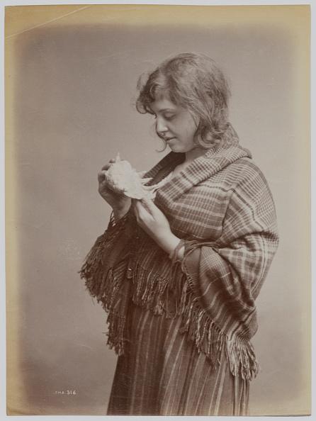殻「Polly Swallow」:写真・画像(5)[壁紙.com]