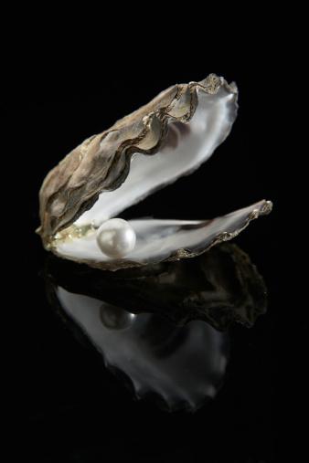Animal Wildlife「Pearl inside oyster shell」:スマホ壁紙(15)