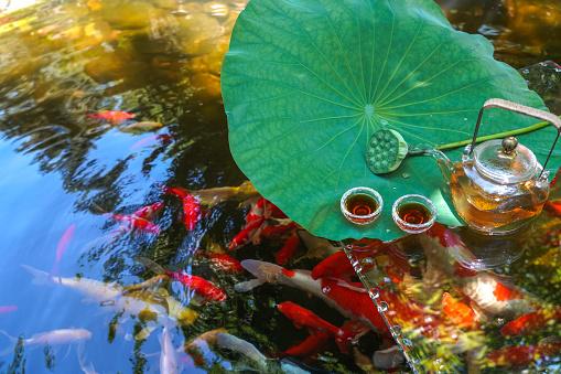 Carp「The pond」:スマホ壁紙(13)