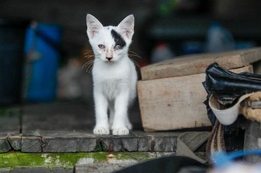 Mixed-Breed Cat「Street cats」:スマホ壁紙(16)