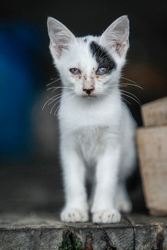 Mixed-Breed Cat「Street cats」:スマホ壁紙(1)