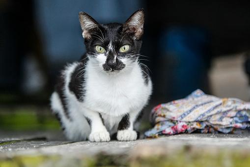 Mixed-Breed Cat「Street cats」:スマホ壁紙(2)