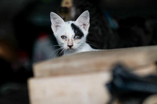 Mixed-Breed Cat「Street cats」:スマホ壁紙(0)
