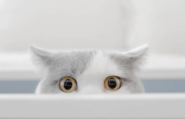 Cat in a box peeking out of a box:スマホ壁紙(壁紙.com)