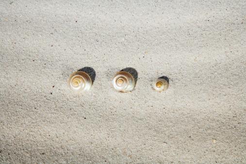 カタツムリ「Sea-snail shells in sand」:スマホ壁紙(15)