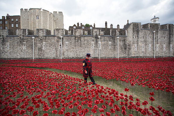 Cross Section「Volunteers Continue To Plant Ceramic Poppies At Tower Of London」:写真・画像(16)[壁紙.com]