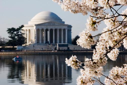 Sakura Matsuri「Cherry Blossoms in Washington DC」:スマホ壁紙(15)