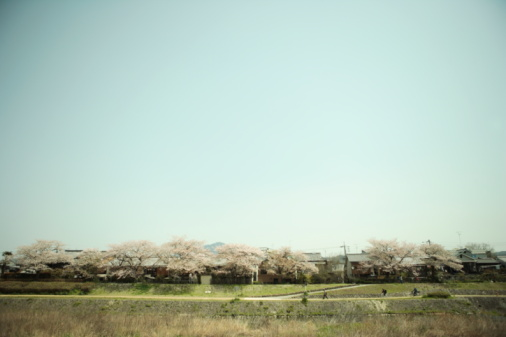 Cherry Blossom「Cherry Blossom Blooming at Riverside」:スマホ壁紙(18)