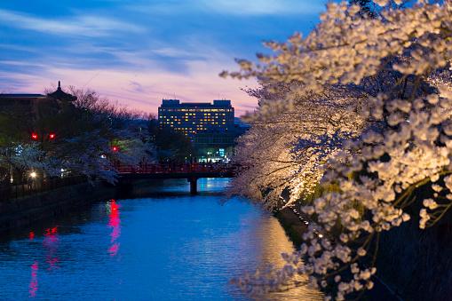 夜桜「Cherry blossom trees by Okazaki canal」:スマホ壁紙(12)