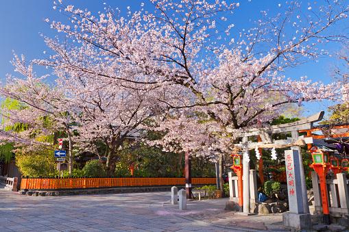 桜「Cherry Blossom Trees and Torii Gate」:スマホ壁紙(11)
