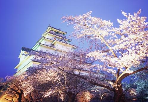 夜桜「Cherry blossoms in Tsurugajo Castle, Fukushima Prefecture, Japan」:スマホ壁紙(4)